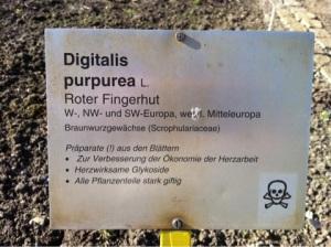 Digitalis Purpurea 2